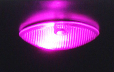 Colored LED Light Bulb (Pink)